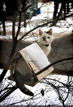 kitty in a bird feeder