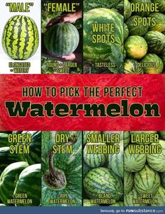 I always wondered why sometimes I'd get a sweet one, and other times a bland, flavorless one. Keep this handy and get great melon every time. Picking Watermelon, Green Watermelon, Fruit Picking, Watermelon Ripeness, Watermelon Facts, When To Pick Watermelon, Watermelon Recipes, Fruit Recipes, Fruits And Veggies