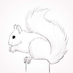 Drawing of Squirrel Squirrel Tattoo, Squirrel Art, Cute Squirrel, Squirrels, Art Drawings For Kids, Art Drawings Sketches, Animal Drawings, Pencil Drawings, Animal Sketches Easy