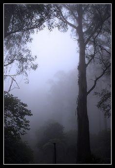 Mt. Dandenong, Melbourne, Australia Copyright: Din Tiranatvitayakul