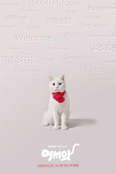 Pemain Meow The Secret Boy Drama : pemain, secret, drama, ไอเดีย, Secret, รายการ, ดราม่า,, เกาหลี,, โปสเตอร์หนัง