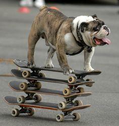 Zoom, Bulldog, Zooom!