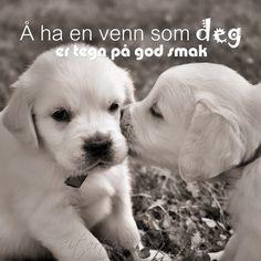 Å ha en venn som deg er tegn på god smak. Animals And Pets, Cute Animals, Quilling, Norway, Texts, Labrador Retriever, Clever, Sayings, Friends