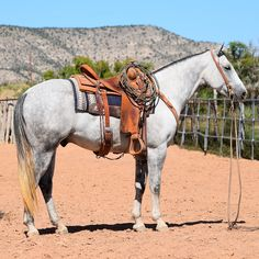 Looking for native American horse names? Here is a collection of native American horse names, along with their meanings. Pretty Horses, Horse Love, Beautiful Horses, Gray Horse, Black Horses, Native American Horses, American Quarter Horse, Quarter Horses, Horse Photos