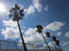 Ringling Bridge - Sarasota, FL
