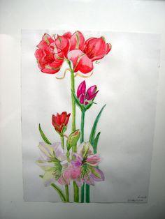 Amaryllis- tekening