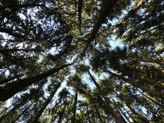 western Oregon forest - remember to look up!