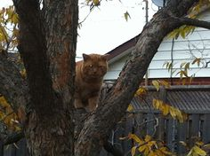 What are you doing in the tree Rusty??