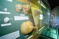 foto di Bottaro. Bellaria Igea Marina, museo delle conchiglie. Shell museum