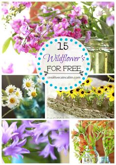15 Wildflowers you can find for FREE ~ Creative Cain Cabin