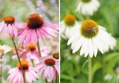 Växter för fjärilar och bin Bin, White Swan, Plants, Gardening, Inspiration, Biblical Inspiration, Lawn And Garden, Plant, Inspirational