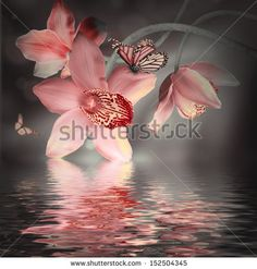 Orchids with a butterfly on the coloured background by Seqoya, via ShutterStock