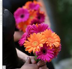 Simple but pretty bouquets with gerber daisies!