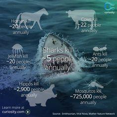 Poor friendly sharks