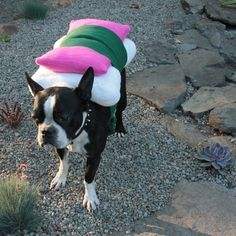 Sushi Dog Costume @Linda Bruinenberg Nelson! This one could be made with a giant shrimp and chop sticks! Must do for Saki!