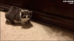 cute and funny cats gif. more here http://artonsun.blogspot.com/2015/04/cute-and-funny-cats-gif.html