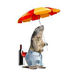 Marmotte des Rochers-de-Naye en vacances / Marmot from Rochers-de-Naye on holiday Images, Comme, Outdoor Decor, Flora, Google, Home Decor, Vacation, Rock Cakes, Pen Pal Letters