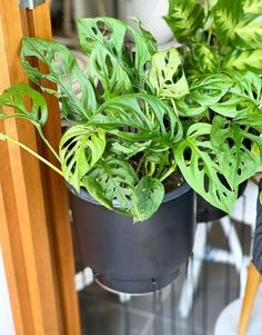 58 Best Indoor Plants To Purify The Air In Your Home These trendy Planters ideas would gain you amazing compliments. Check out our gallery for more ideas these are trendy this year. Best Indoor Plants, Hanging Plants, Skin Treatments, Healthy Skin, Skin Care Tips, Planters, Collagen, Amazing, Gain