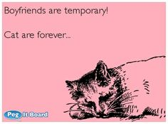 Boyfriends and cats Love Ecards, E Cards, I Love Cats, Boyfriends, Create Your Own, Funny Stuff, My Life, Funny Memes, Boat