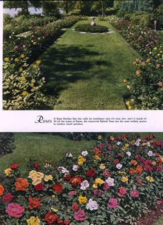 Rosas. Fuente: Biles, R. The complete book of garden magic. [New York], 1948