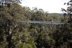 Valley of the Giants Tree Top Walk, Australia - REX Features