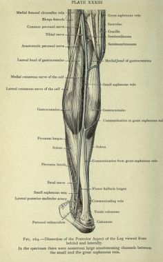 Cunningham's Manual of Practical Anatomy 7th ed. (1921) revised and edited by Arthur Robinson. Publisher: Humphrey Milford, Oxford University Press.