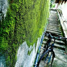 Atmospheric alley and lonely #bike in #malaysia #travelasia #travelphotography  #travel #travelgram #instatravel #nature #naturelover #colorful