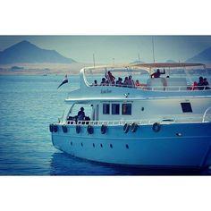 【mahi_guide】さんのInstagramをピンしています。 《#sharmelsheikh #Gopro #actioncamera #actioncam #diving #snorkeling #scubadiving #海 #夏 #シャルムエルシェイク #エジプト #travel #vacation #sea #Egypt #ゴープロ #カメラ #撮影 #ビーチ #ダイビング #シュノーケリング #スキューバダイビング #スキューバ #海外 #旅行 #旅 #camera #photography #beautifuldestinations #bestvacations》
