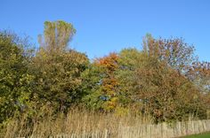 Autumn colours in Kinness Burn Park in St Andrews.