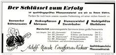 Original-Werbung/ Anzeige 1958 - BAUMSCHULE / PFLANZENZUCHT ADOLF MAUK / LAUFFEN AM NECKAR  - ca. 170 x 80 mm