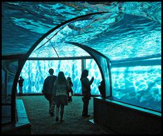 The Under Water Dolphin Dome at the Indianapolis Zoo by Gdnght1, via Flickr