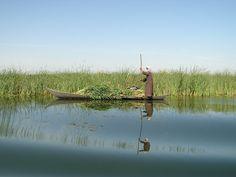 """Depois de uma década de trabalho, o Iraque tem o seu primeiro Parque Nacional, o Central Marshes of Iraque. O parque foi realizado graças ao trabalho do Nature Iraq, liderada por Azzam Alwash,em conjunto com o governo do país. Durante a ditadura de Sadam Hussein, Alwash vivia na Califórnia e era um engenheiro bem sucedido....<br /><a class=""""more-link""""…"""