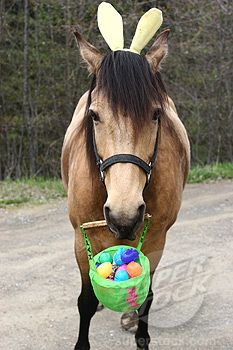 Horse holding a basket of Easter eggs and wearing bunny ears