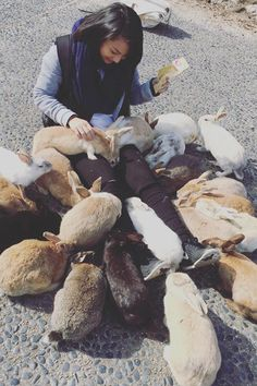 Just when you thought Japan couldn't surprise you anymore with their crazy attractions, they do. Exhibit A: Ōkunoshima, an island filled with tons of bunnies. Bunny Island, Rabbit Island, Types Of Animals, Cute Bunny, Asia Travel, Fantasy Characters, Cuddling, Places To Visit, Creatures