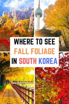 Find out where to see fall foliage in South Korea with this complete guide to all the best places to see autumn leaves in South Korea. From Seoul to Jeju Island, and the many national parks in South Korea. South Korea Travel, Asia Travel, Japan Travel, Travel Abroad, Travel Advice, Travel Guides, Travel Tips, Travel Articles, Places To Travel