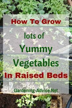 Create a vegetable container garden in your backyard by reusing and upcycling! We show you how we grow herbs and veggies on a shoestring.