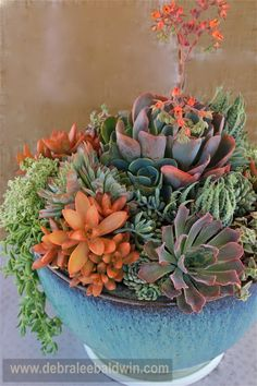 Pale green and gray succulents can combine with golden-orange shades of succulents like sedum nussbaumerianum to make a striking arrangement. Growing Succulents, Succulents In Containers, Container Plants, Cacti And Succulents, Planting Succulents, Container Gardening, Planting Flowers, Air Plants, Garden Plants