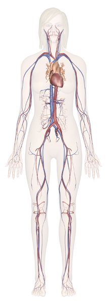 Explore Human Anatomy, Physiology, and Genetics Science Resources, Science Lessons, Science Education, Teaching Science, Life Science, Science Classroom, Learning Resources, Classroom Ideas, Human Body Unit