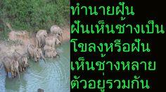 ฝันเห็นช้างทั้งโขลง หรือ ฝันเห็นช้างหลายตัวอยู่รวมกัน