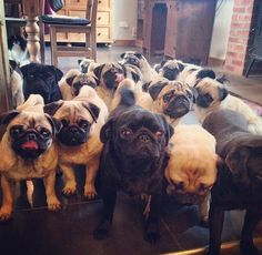 Pug grumble - oh the bliss!