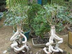 نتيجة بحث الصور عن حديقة الاورمان النباتية