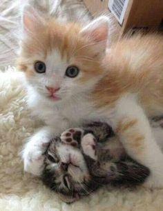 Maman et bébé chat