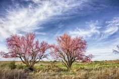 Azaila en primavera anticipada - Adrian Sediles