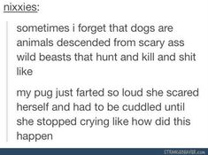 funny tumblr comments 12-31 2. excuse the language but thats funny. the poor pug hahahaha!!