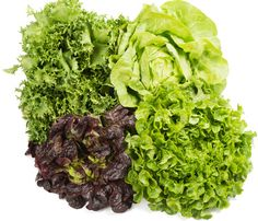 Com cultivar enciams Plantar, Lettuce, Cabbage, Vegetables, Food, Harvest, Vegetable Recipes, Eten, Veggie Food