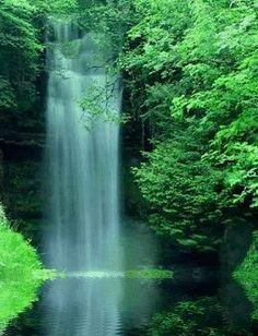 Tải hình nền động – Thiên nhiên xanh mát để hòa mình vào sắc xanh của cây cối thiên nhiên và thác nước trong vắt, mát lành nhé!