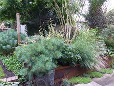 Darcy Daniels' front garden in Portland, Oregon.  Fantastic.
