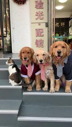 Funny Dog Videos, Funny Animal Memes, Funny Animal Pictures, Funny Memes, Cute Funny Dogs, Cute Funny Animals, Cute Cats, Funny Farm, Gato Gif
