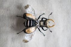 black-gold beetle, textil art, insect, Soft sculptur,home decor, unique design, eco friedly,fabric beetle by mysouldesign on Etsy https://www.etsy.com/uk/listing/285376297/black-gold-beetle-textil-art-insect-soft