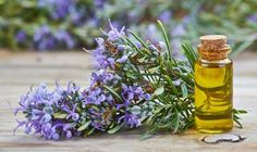 Herbal Oil: Rosemary Oil Benefits and Uses Essential Oils For Hair, Essential Oil Uses, Rosemary Oil For Hair, Rosemary Plant, Herbal Oil, Oil Benefits, Health Benefits, Hair Growth Oil, Diy Shampoo